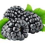 blackberry_PNG14